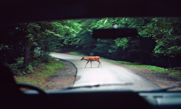 Myth: Only Comprehensive Coverage Covers Hitting a Deer