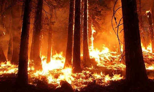 Wildfires and Flood Insurance