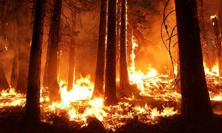 Wildfire Insurance and Risk Management